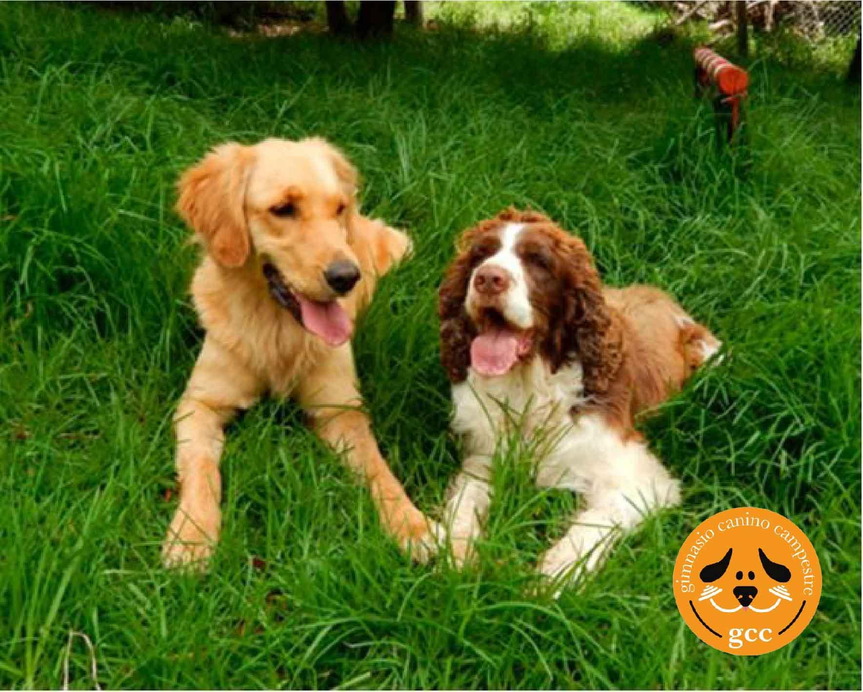 buen comportamiento de los perros en gimnasio canino campestre
