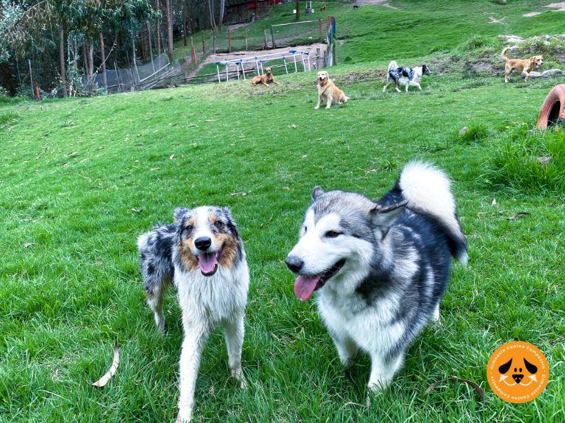 mejorar el comportamiento de los perros