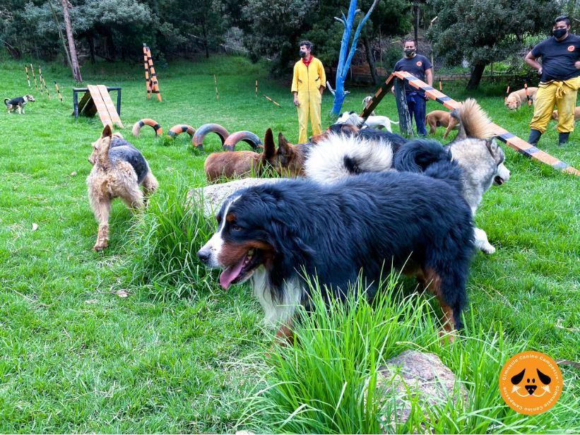 Buena conducta caninca - Gimnasio Canino Campestre
