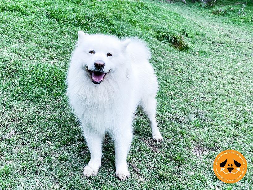 Caminatas Ecológicas con Mascotas en Bogotá en el Gimnasio Canino Campestre