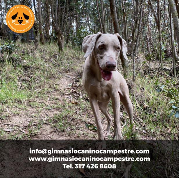 Caminatas Ecológicas con Mascotas en el Gimnasio Canino Campestre