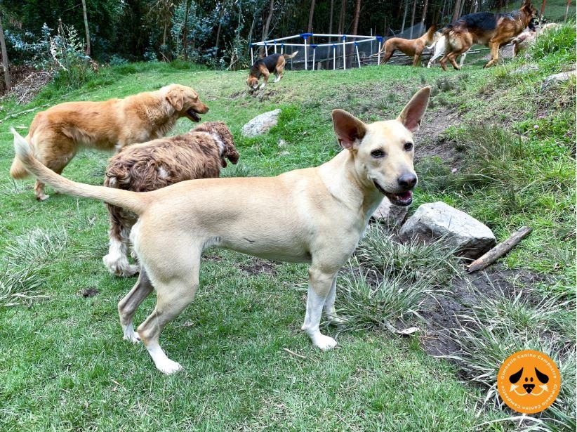 Caminatas Ecológicas con Perros en Bogotá
