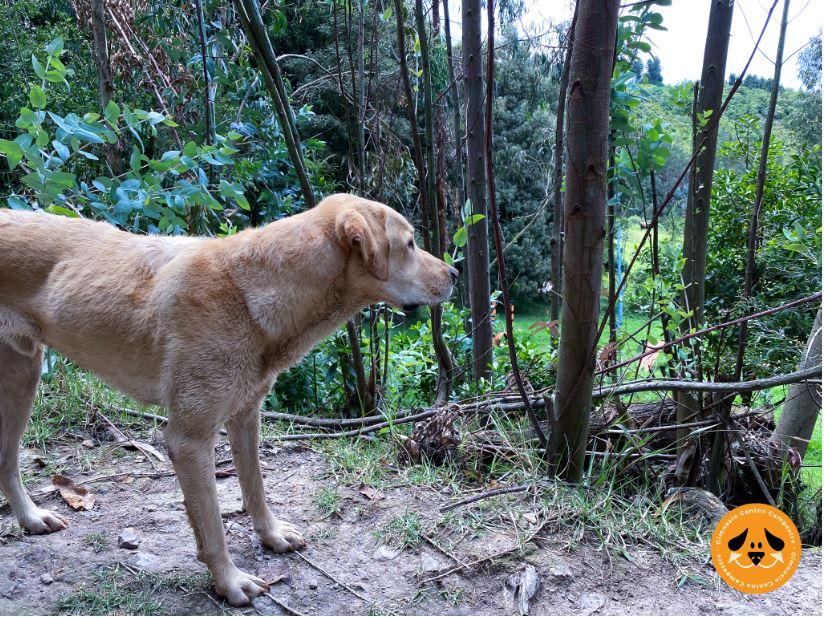 Caminatas ecológicas con mascotas Gimnasio Canino Campestre