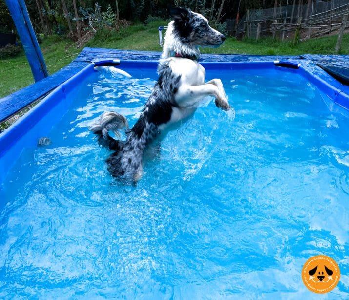 natación en piscina para perros