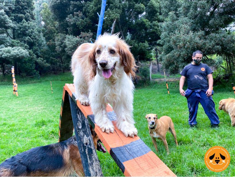 ejercicios de obediencia canina básica