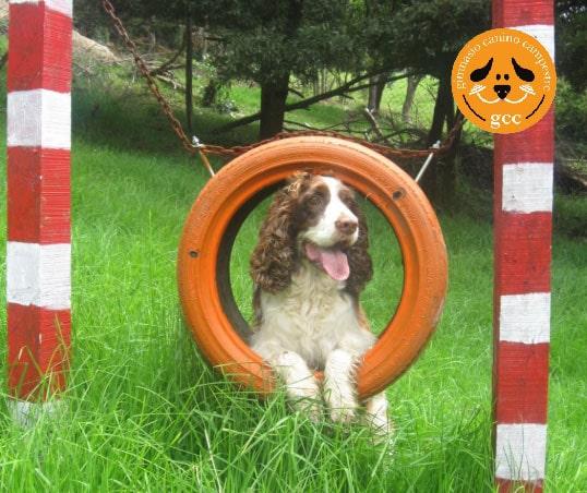 Internado para Perros en Bogotá