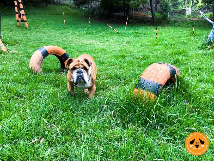 Juego de Mascotas - Gimnasio Canino Campestre