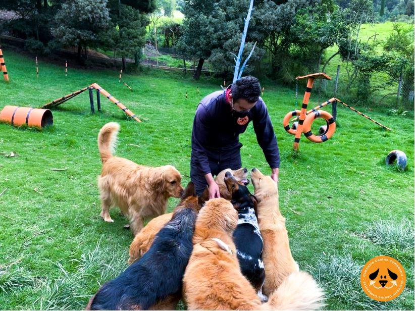 Juego de perros Gimnasio Canino Campestre