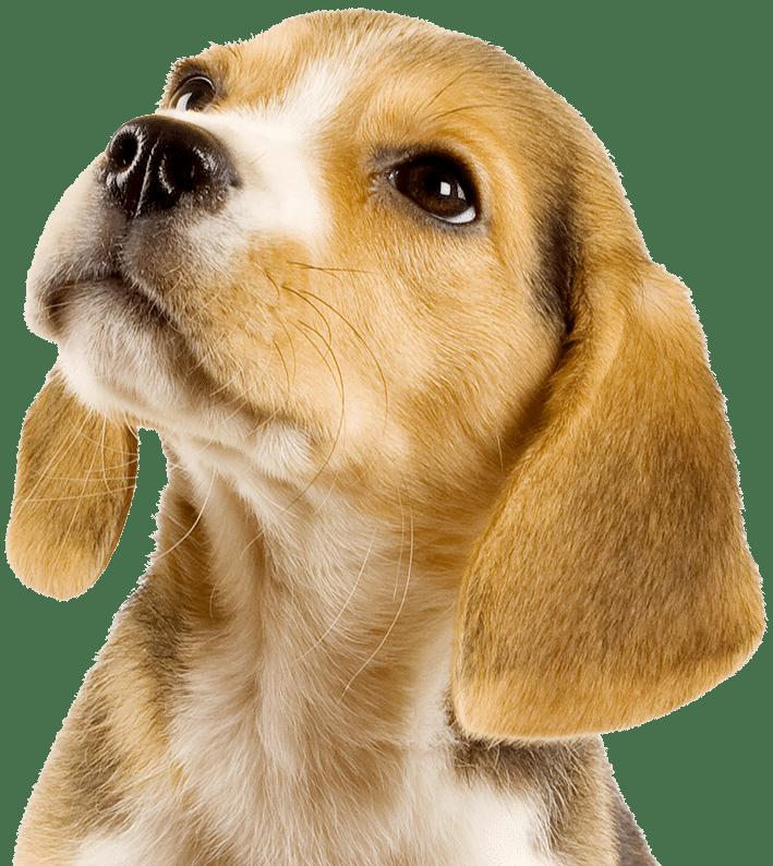 guardería canina gimnasio canino campestre