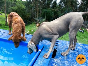 piscina para perros en gimnasio canino campestre